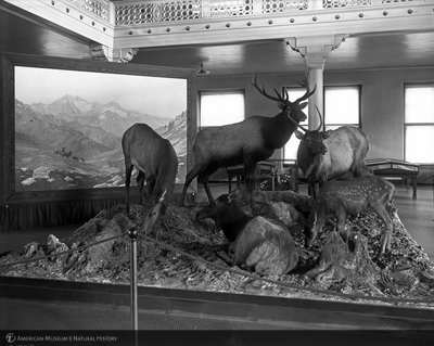 http://images.library.amnh.org/d/t/8x10/0002/00031753_l.jpg