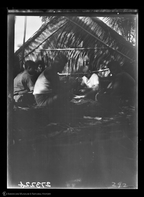 http://lbry-web-002.amnh.org/san/to_upload/Beck-PapuaNewGuinea/W-4x5-negs/273224.jpg
