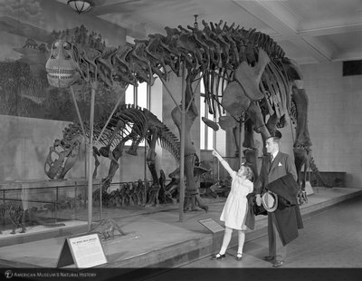 http://images.library.amnh.org/d/t/4x5/0001/00287895_l.jpg