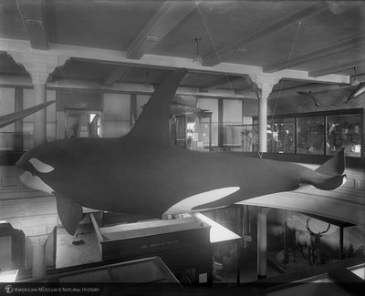 http://images.library.amnh.org/d/t/8x10/0001/00037231_l.jpg