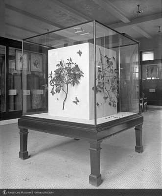 http://images.library.amnh.org/d/t/8x10/0001/00000395_l.jpg