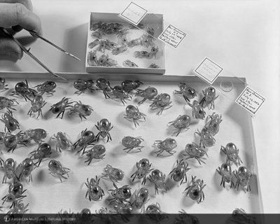 http://images.library.amnh.org/d/t/8x10/0002/00325572_l.jpg