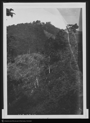 http://lbry-web-002.amnh.org/san/to_upload/Beck-PapuaNewGuinea/NG-5x7-negs/115634.jpg