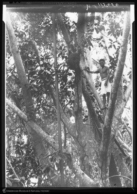 http://lbry-web-002.amnh.org/san/to_upload/Beck-PapuaNewGuinea/NG-5x7-negs/115656.jpg