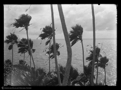 http://lbry-web-002.amnh.org/san/to_upload/Beck-PapuaNewGuinea/W-5x7-negs/114702.jpg
