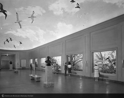 http://images.library.amnh.org/d/t/8x10/0002/00316031_l.jpg