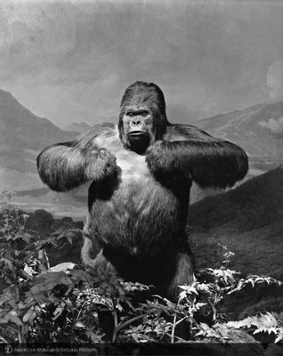 http://images.library.amnh.org/d/t/8x10/0002/00315077_l.jpg
