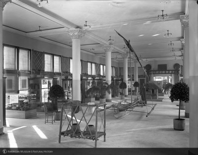 http://images.library.amnh.org/d/t/8x10/0001/00033097_l.jpg