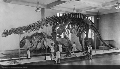 http://images.library.amnh.org/d/t/8x10/0002/00312229_l.jpg
