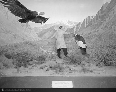 http://images.library.amnh.org/d/t/8x10/0002/00329258_l.jpg