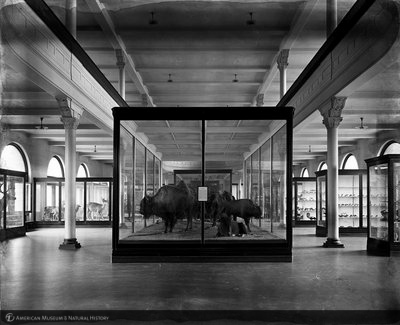 http://images.library.amnh.org/d/t/8x10/0001/00000356_l.jpg