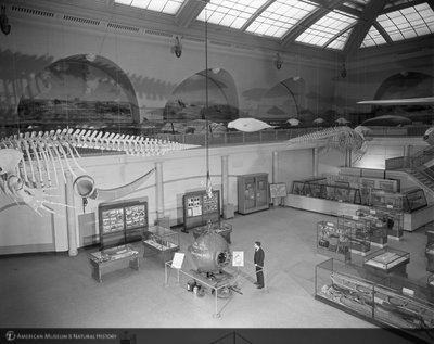 http://images.library.amnh.org/d/t/8x10/0001/00314603_l.jpg