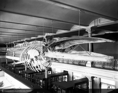 http://images.library.amnh.org/d/t/8x10/0001/00031615_l.jpg
