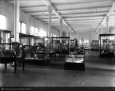 http://images.library.amnh.org/d/t/8x10/0001/00003406_l.jpg