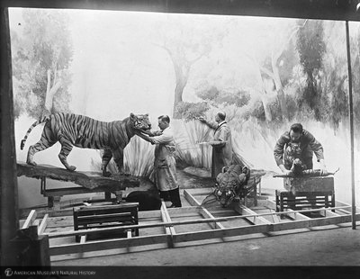 http://images.library.amnh.org/d/t/4x5/0001/00281096_l.jpg