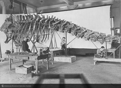 http://images.library.amnh.org/d/t/8x10/0002/00326379_l.jpg