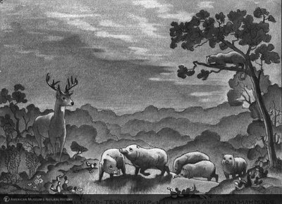 http://images.library.amnh.org/d/t/5x7/0001/00121154_l.jpg