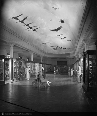 http://images.library.amnh.org/d/t/8x10/0001/00311984_l.jpg