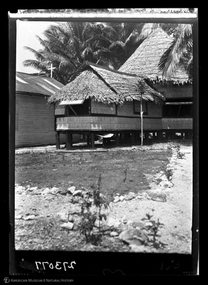 http://lbry-web-002.amnh.org/san/to_upload/Beck-PapuaNewGuinea/W-4x5-negs/273077.jpg