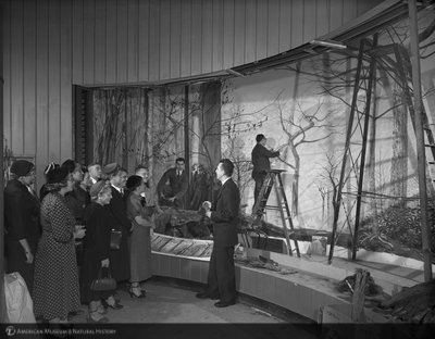 http://images.library.amnh.org/d/t/8x10/0001/00322580_l.jpg