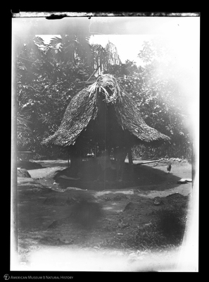 http://lbry-web-002.amnh.org/san/to_upload/Beck-PapuaNewGuinea/W-4x5-negs/273225.jpg