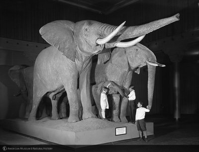 http://images.library.amnh.org/d/t/8x10/0001/00312163_l.jpg