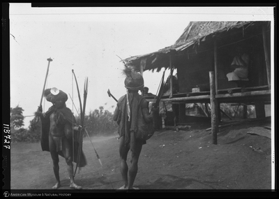 http://lbry-web-002.amnh.org/san/to_upload/Beck-PapuaNewGuinea/NG-5x7-negs/115727.jpg