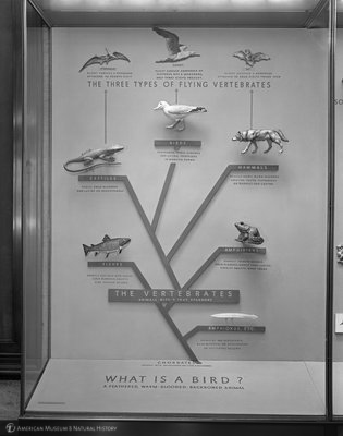 http://images.library.amnh.org/d/t/8x10/0001/00318751_l.jpg