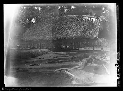 http://lbry-web-002.amnh.org/san/to_upload/Beck-PapuaNewGuinea/W-4x5-negs/273228.jpg