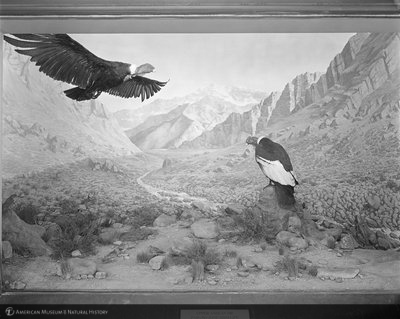 http://images.library.amnh.org/d/t/8x10/0002/00329253_l.jpg