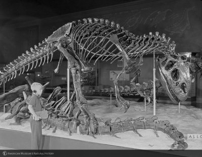 http://images.library.amnh.org/d/t/4x5/0001/002A7644_l.jpg