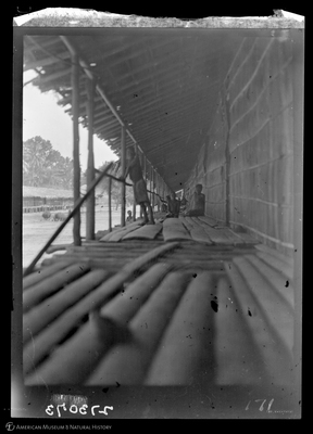 http://lbry-web-002.amnh.org/san/to_upload/Beck-PapuaNewGuinea/W-4x5-negs/273073.jpg