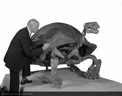 http://images.library.amnh.org/d/t/8x10/0001/00313374_l.jpg