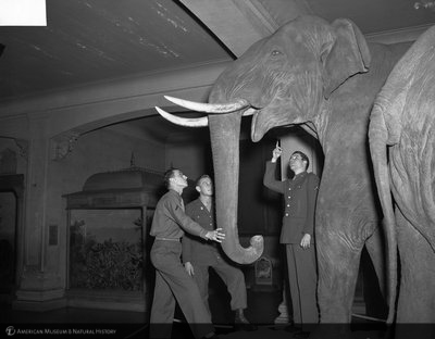 http://images.library.amnh.org/d/t/4x5/0001/00297884_l.jpg