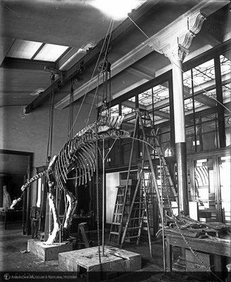 http://images.library.amnh.org/d/t/8x10/0001/00035377_l.jpg