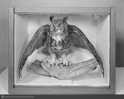 http://images.library.amnh.org/d/t/8x10/0002/00325008_l.jpg