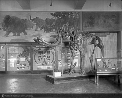 http://images.library.amnh.org/d/t/8x10/0001/00039130_l.jpg