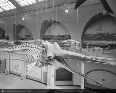 http://images.library.amnh.org/d/t/8x10/0001/00314191_l.jpg