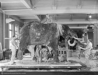 http://images.library.amnh.org/d/t/4x5/0001/00283076_l.jpg