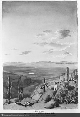 http://images.library.amnh.org/d/t/5x7/0001/00121153_l.jpg