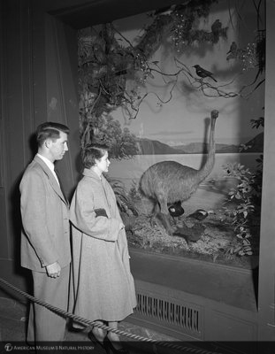 http://images.library.amnh.org/d/t/8x10/0001/00322577_l.jpg