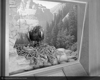 http://images.library.amnh.org/d/t/8x10/0002/00329343_l.jpg