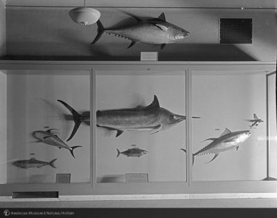 http://images.library.amnh.org/d/t/8x10/0002/00313266_l.jpg