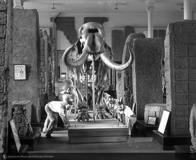 http://images.library.amnh.org/d/t/8x10/0002/00031740_l.jpg