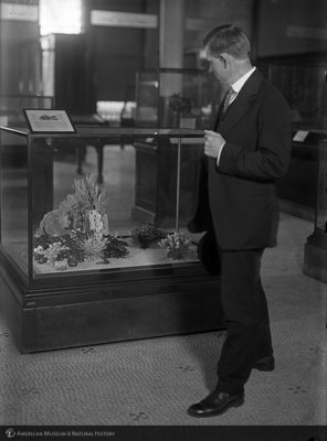 http://images.library.amnh.org/d/t/5x7/0001/00019996_l.jpg