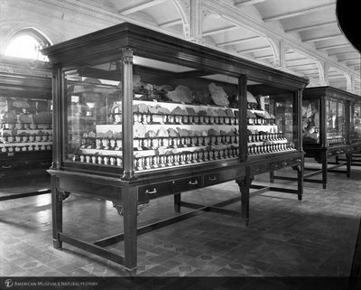 http://images.library.amnh.org/d/t/8x10/0001/00311211_l.jpg