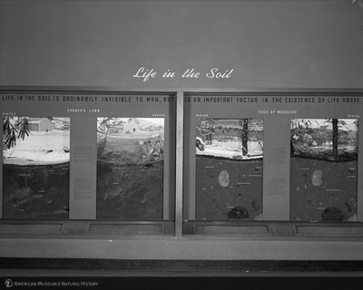 http://images.library.amnh.org/d/t/8x10/0002/00323965_l.jpg