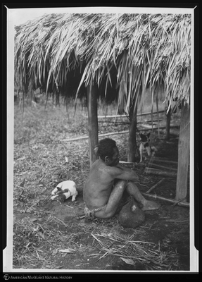 http://lbry-web-002.amnh.org/san/to_upload/Beck-PapuaNewGuinea/NG-5x7-negs/117441.jpg