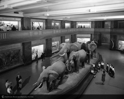 http://images.library.amnh.org/d/t/8x10/0002/00328663_l.jpg