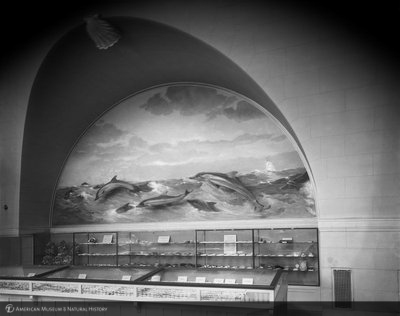 http://images.library.amnh.org/d/t/8x10/0001/00314194_l.jpg